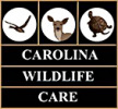 carolina-wildlife-care